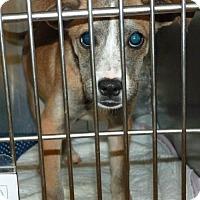 Adopt A Pet :: 47950 - Zanesville, OH