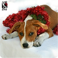 Adopt A Pet :: Elvis - Tomball, TX