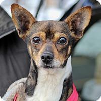 Adopt A Pet :: Todd - Liberty Center, OH