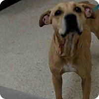 Adopt A Pet :: BELLA - Tavares, FL
