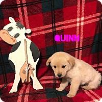 Adopt A Pet :: Quinn - Garden City, MI