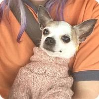 Adopt A Pet :: Dottie - Anderson, SC
