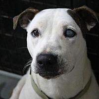 Adopt A Pet :: LIBBY - McKenzie, TN
