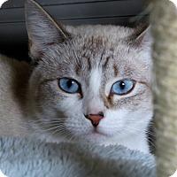 Adopt A Pet :: Mai - Oakland Park, FL