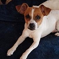 Adopt A Pet :: Elle - San Francisco, CA