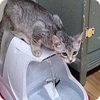 Adopt A Pet :: Remi - Monroe, GA