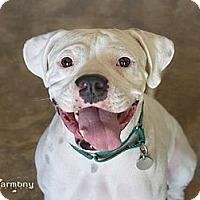 Adopt A Pet :: Pluto - Phoenix, AZ