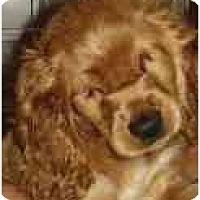 Adopt A Pet :: Gidget - Miami, FL