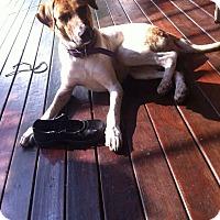 Adopt A Pet :: Tiga - Wonder Lake, IL