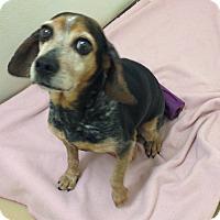 Adopt A Pet :: Jubilee - Dumfries, VA