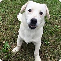 Adopt A Pet :: Sheldon - Russellville, KY