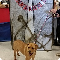 Adopt A Pet :: Elsa in Ct - Manchester, CT