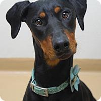 Adopt A Pet :: Luna - Dublin, CA