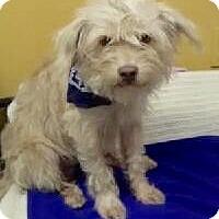 Adopt A Pet :: TAYLOR - Fort Pierce, FL