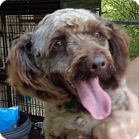 Adopt A Pet :: Brayden - Crump, TN