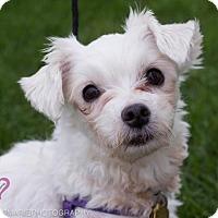 Adopt A Pet :: Lola - Grand Rapids, MI
