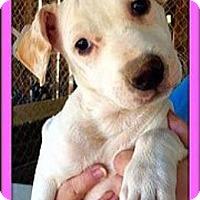 Adopt A Pet :: Ally - Rancho Cucamonga, CA