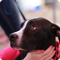 Adopt A Pet :: Duncan - Morganville, NJ