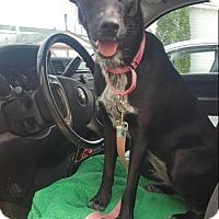 Adopt A Pet :: Mitzi *Courtesy Post* - Clarkston, MI