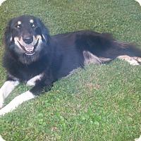 Adopt A Pet :: Nali - Elburn, IL