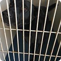 Adopt A Pet :: Tajin - Fresno CA, CA