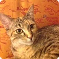 Adopt A Pet :: Jill C160129 - Edina, MN