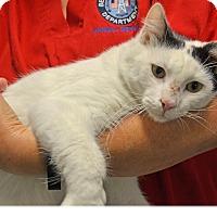Adopt A Pet :: Winnie - Beaumont, TX