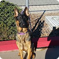 Adopt A Pet :: Mason - Reno, NV