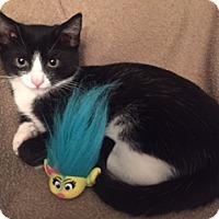 Adopt A Pet :: Jami - Gainesville, VA