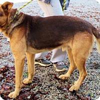 Adopt A Pet :: Rocco - Westwood, NJ