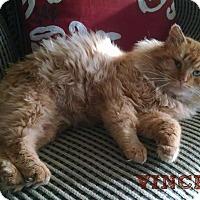 Adopt A Pet :: Vincent - Valley City, ND