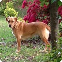 Adopt A Pet :: Lucy - Lawrenceville, GA