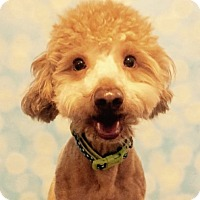 Adopt A Pet :: Hurley - West Seneca, NY