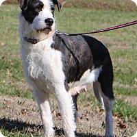 Adopt A Pet :: Harlequin~adopted! - Glastonbury, CT