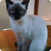 Adopt A Pet :: Smoky - Marion, NC