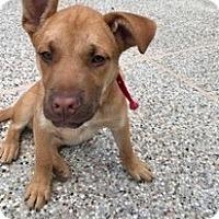 Adopt A Pet :: Luke - Calgary, AB