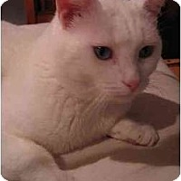 Adopt A Pet :: Casper - Portland, OR