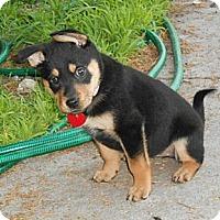 Adopt A Pet :: NATTIE - Torrance, CA