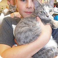 Adopt A Pet :: Lily - Bear, DE