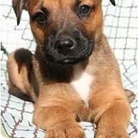 Adopt A Pet :: Jabba the Hut - Richmond, VA