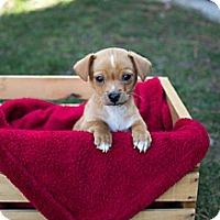 Adopt A Pet :: Rico - Seattle, WA