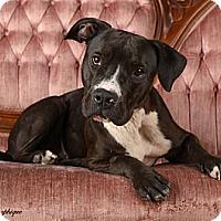 Adopt A Pet :: Mamie - Las Vegas, NV