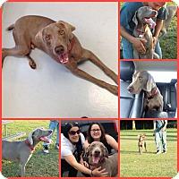Adopt A Pet :: RANIER - Davenport, FL