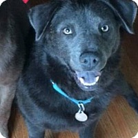 Adopt A Pet :: Reign - Homewood, AL