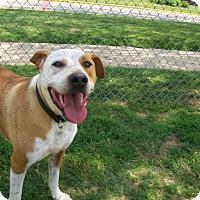 Adopt A Pet :: Tucker - Lancaster, OH