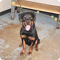 Adopt A Pet :: Zeus - Frederick, PA