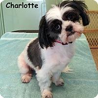 Adopt A Pet :: Charlotte - Warren, PA