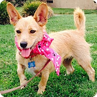 Adopt A Pet :: *URGENT* Sweet Jane - Van Nuys, CA