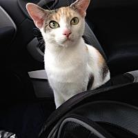 Adopt A Pet :: Momma - Philadelphia, PA