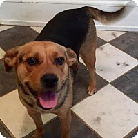 Adopt A Pet :: Lucy(CL) - Greensboro, NC